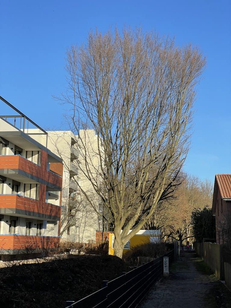 Der Baum und der Neubau