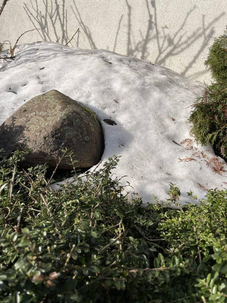Der letzte Schnee.