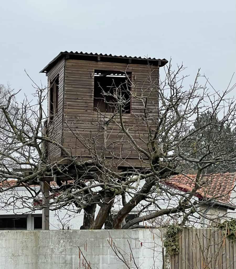 Baumhaus im Baum