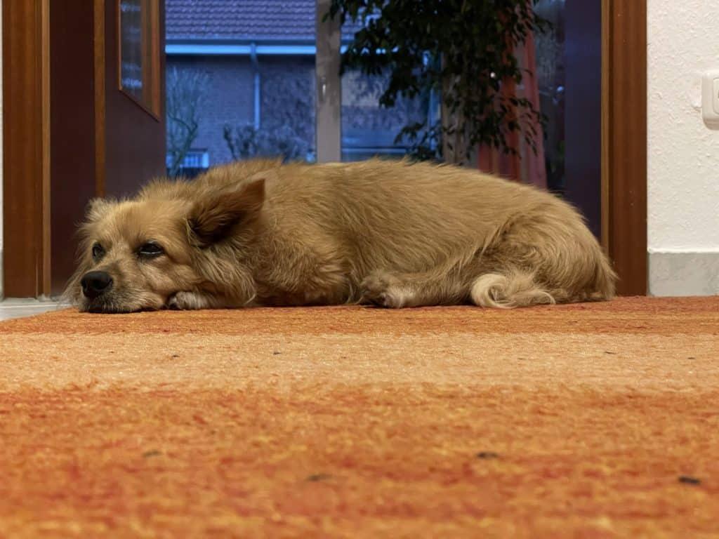 Sallyman liegt auf dem Teppich
