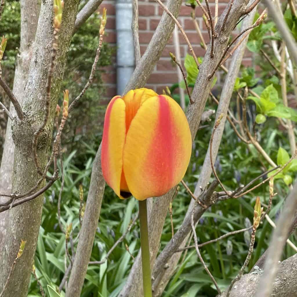 Blume im Beet