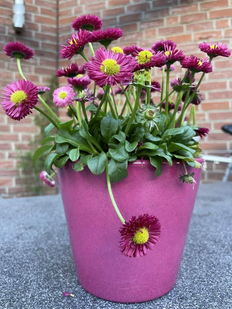 Blumentopf auf dem Terrassentisch