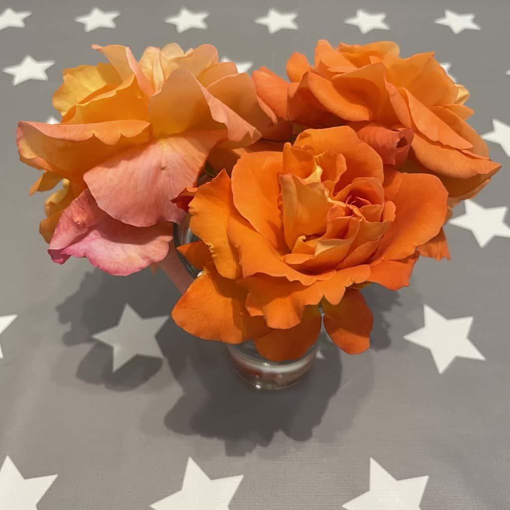 Westerlanrosen in der Vase