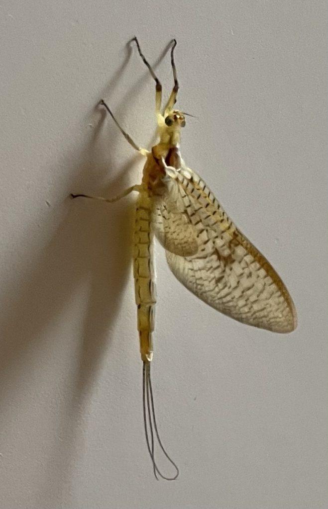 Insekt an Haustür
