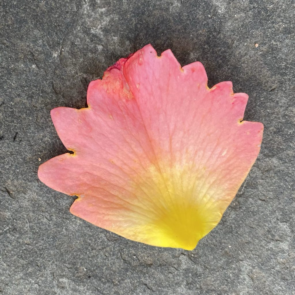 Blatt auf Bodenfliese