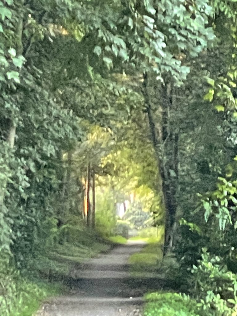 Weg unter Grün