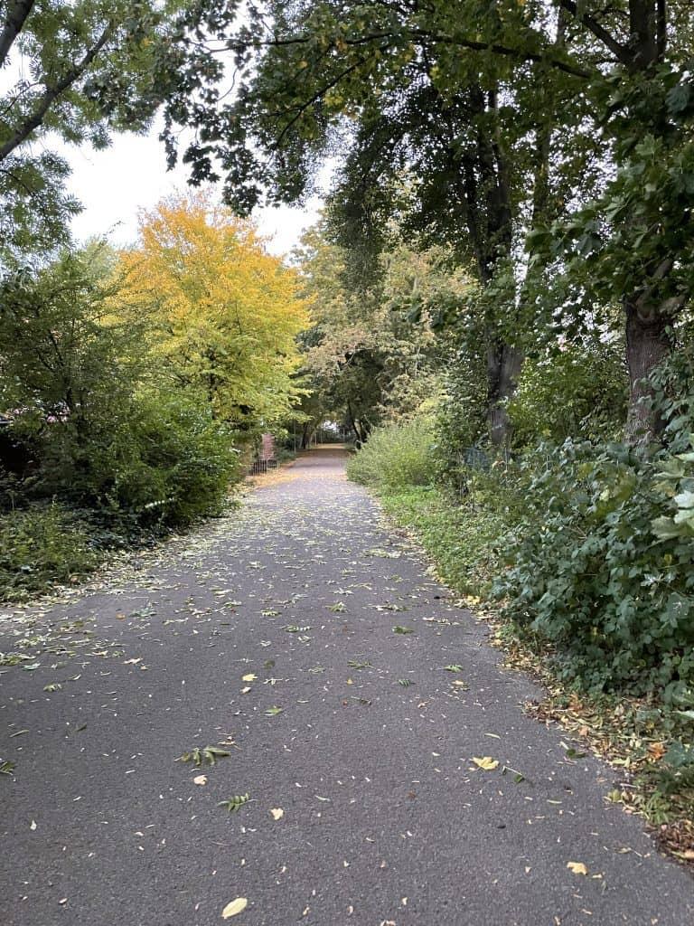 Herbstlicher Weg mit wenig Laub